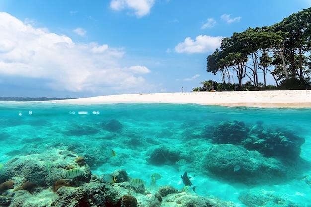 Изображение разделено на поверхности и под водой рядом с тропическим островом с песчаным пляжем и красочными морскими обитателями с тропическими рыбами под водой. андаманские и никобарские острова. понятие о сноркелинге и дайвинге