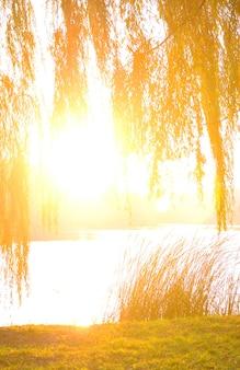 秋に川のほとりの木の枝を通して啓発された露出過度の太陽