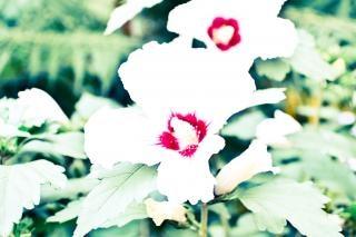 Overexposed white flowers