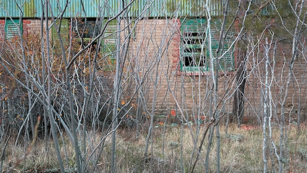 Overgrown garden in front of brick wall with broken windows of an old abandoned house in autumn