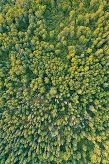 화창한 낮 동안 두꺼운 아름다운 숲의 오버 헤드 공중 무인 항공기 샷