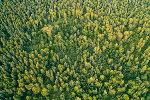 Overhead aerial drone shot of a thick beautiful forest during sunny daytime