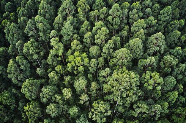아름다운 나무와 녹지가있는 두꺼운 숲의 공중 샷