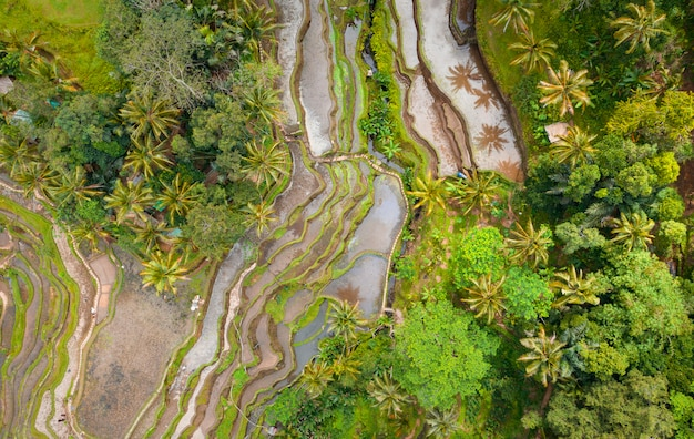 Overhead aerial view of tegallalang rice terrace. ubud bali - indonesia