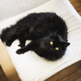 Overhead closeup shot of a black domestic furry cat on a pillow