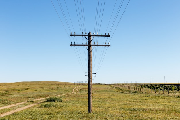 Overhead line on wooden pillars in the mongolian steppe