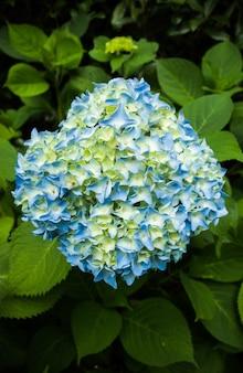 Scatto dall'alto di fiori blu, bianchi e gialli con il verde