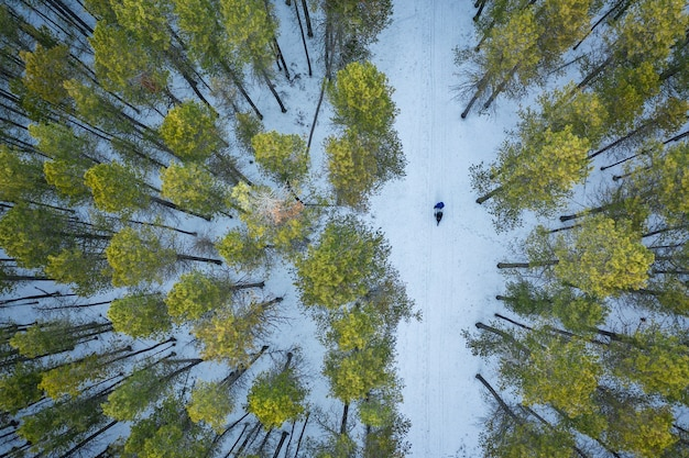 Overhead shot of a forest with tall green trees during winter