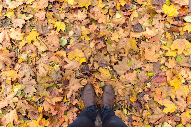 Overhead shot of man standing on autumn leaves
