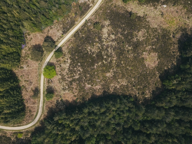 Overhead shot of a narrow road in a forest in a puddletown forest in dorset, uk