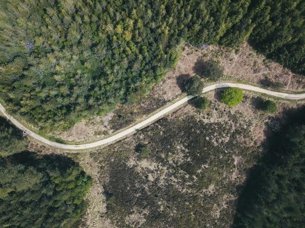 Верхний снимок узкой дороги в лесу в puddletown forest в дорсете, великобритания