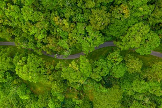 Вид сверху дороги в лесу, окруженной высокими деревьями, снятый днем.