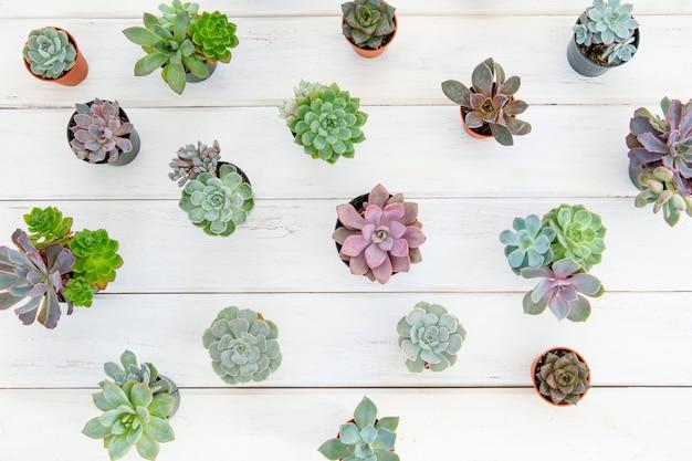 최소한의 개념을 원예 흰색 나무 테이블에 냄비에 많은 다육 식물의 오버 헤드 샷