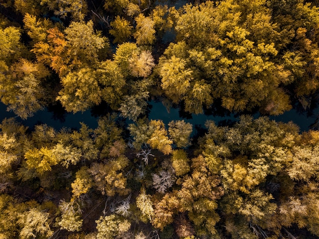 Overhead shot of a river in the middle of brown and yellow leafed trees