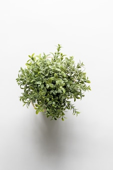 Overhead vertical shot of a green plant on a white surface