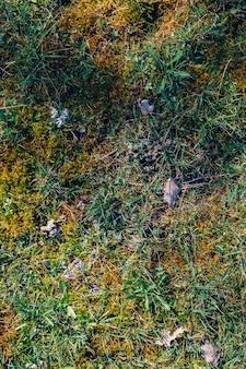 Colpo verticale sopraelevato di vegetazione nel parco maksimir a zagabria in croazia durante la primavera