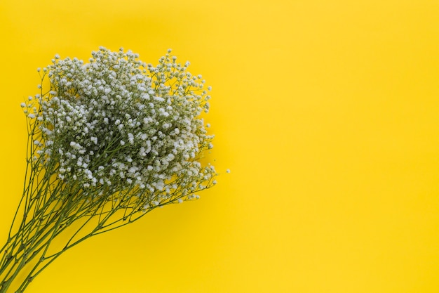 An overhead view of baby's-breath flowers on yellow background