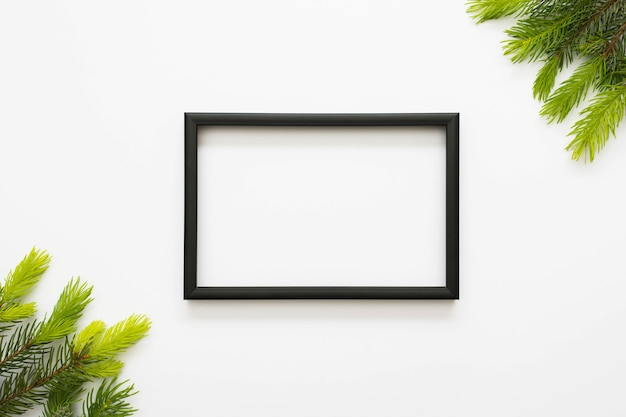Overhead view of black border frame and green fir isolated on white background