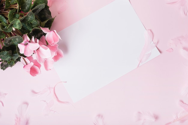 An overhead view of blank paper with pink flowers against colored background