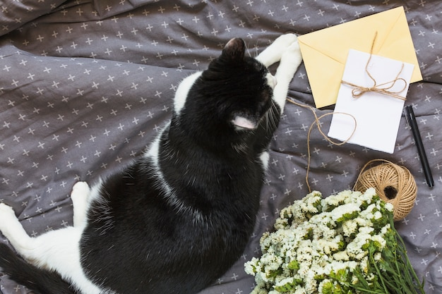 An overhead view of cat sitting near the greeting cards; string spool; pen and flower bouquet on gray clothes