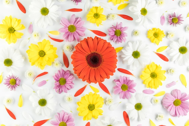An overhead view of colorful flowerhead on white background