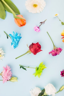 Overhead view of different type of colorful flowers on blue background