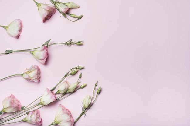 Una vista aerea dei fiori di eustoma su sfondo rosa