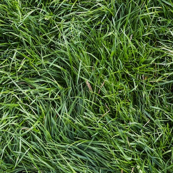 An overhead view of green grass