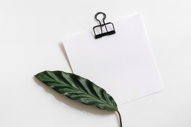 An overhead view of green leaf on paper with black paperclip against white background