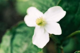 Overhead view of a white flower
