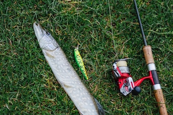 Overhead view of fish, lure and fishing rod on green grass