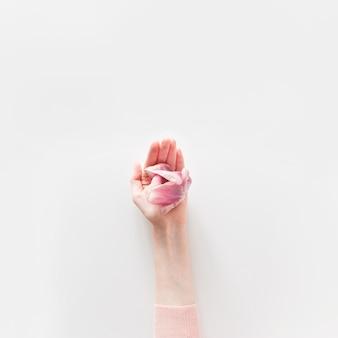 흰색 배경에 고립 된 여자의 손에 핑크 튤립의 오버 헤드보기. 평면 위치, 평면도