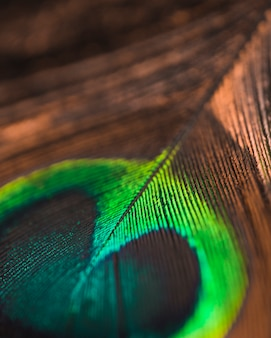 An overhead view of peacock feather eye background