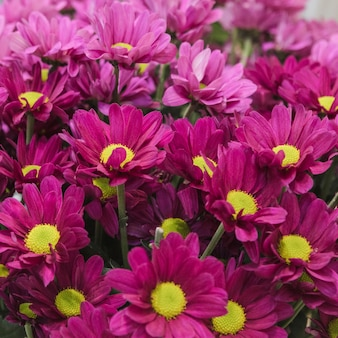 An overhead view of pink chamomile bouquet