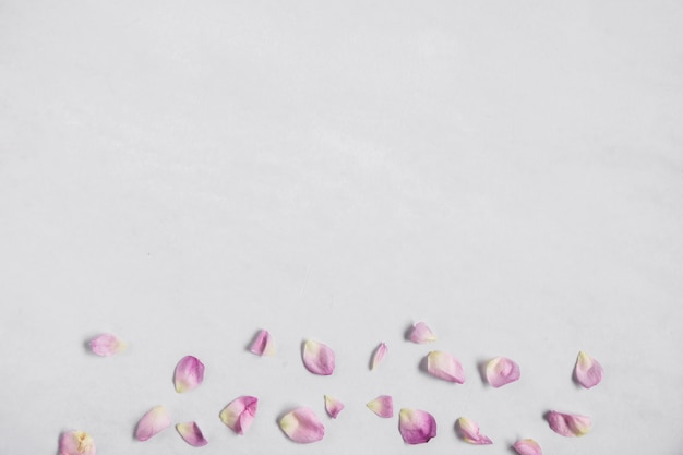An overhead view of pink petals at the bottom of white backdrop