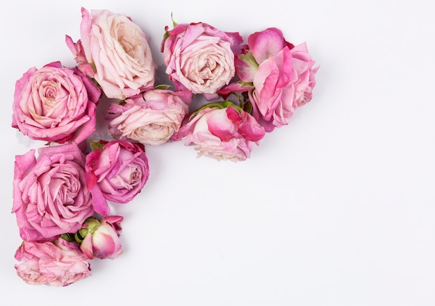 Overhead view of pink roses on white surface