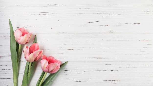 An overhead view of pink tulips on white wooden textured backdrop