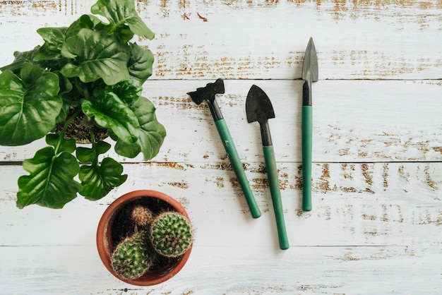 An overhead view of potted plants with gardening tools on white wooden desk