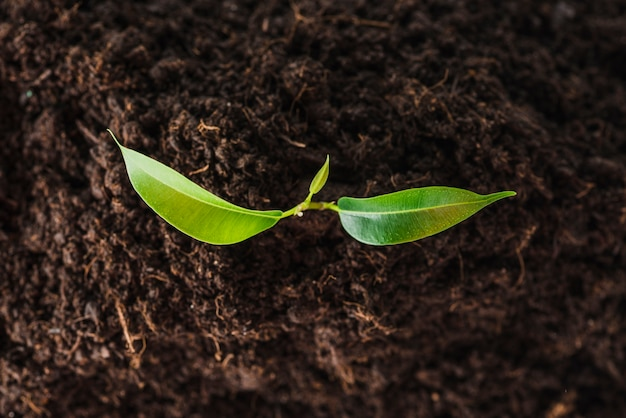 An overhead view of seedling growing in the soil