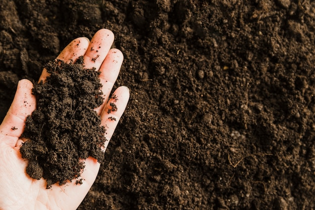 An overhead view of soil on person's hand