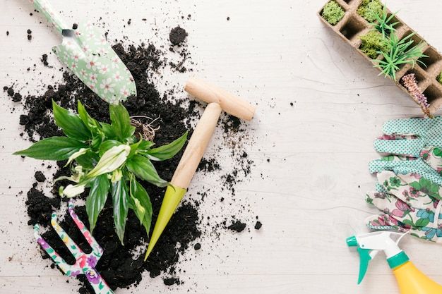 Overhead view of soil and plant with gardening equipments on table
