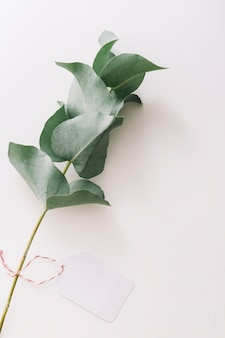 An overhead view of twig with blank tag isolated over white background