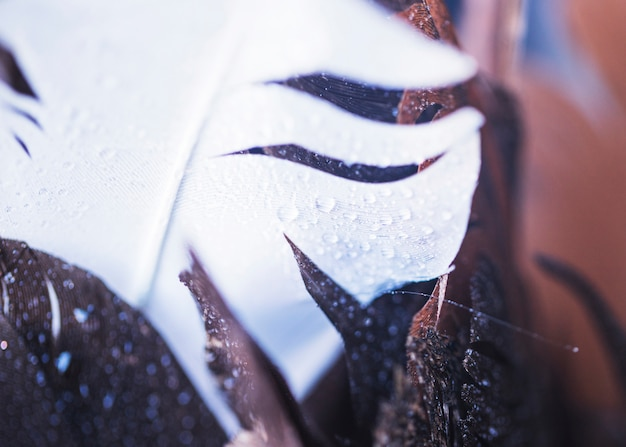 An overhead view of water droplets on the white and brown feather
