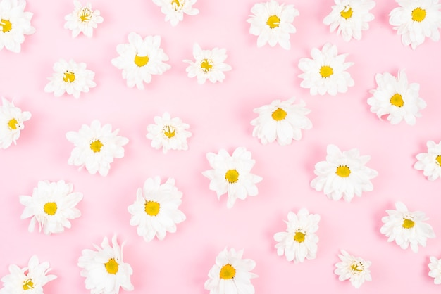 An overhead view of white flower pattern on pink background
