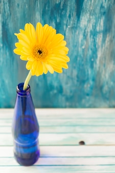 Overhead view of yellow gerbera flower in the bottle on wooden table