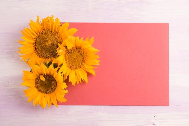 Overhead view of yellow sunflowers on blank red paper over the textured background