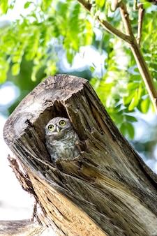 Owl in cavities nature