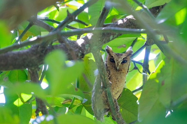 The owl is looking this way. during the daytime mattresses in the orchard's gardeners.