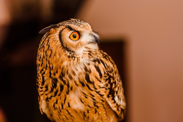 Owl ornitology