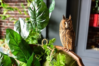 Owl sits on the chair before a green plant